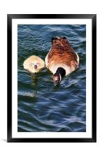 Staying Close To Mum, Framed Mounted Print