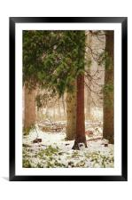 a small corner of the pine forest, Framed Mounted Print