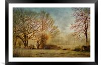 The light through the trees, Framed Mounted Print