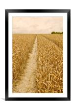 The Golden Pathway, Framed Mounted Print