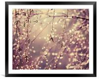 Natures Fairy Lights, Framed Mounted Print