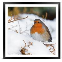 Robin in snow, Framed Mounted Print