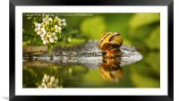 Whos the fairest, Framed Mounted Print