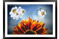 You are my sunshine, (Sunflower Dogrose and Birds), Framed Mounted Print