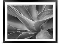Agave Shadows and Light, Framed Mounted Print