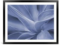 Agave in Blue, Framed Mounted Print