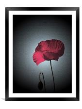 Dark Remembrance Poppy, Framed Mounted Print