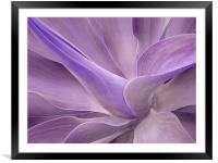 Agave Attenuata Abstract 2, Framed Mounted Print
