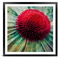 echinacea art, Framed Mounted Print