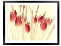 ethereal tulips, Framed Mounted Print