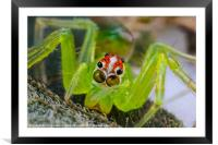 extreme macro of a spiders face, Framed Mounted Print