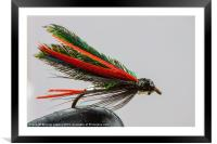 Trout fishing fly, Framed Mounted Print