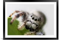 heres looking at you kid, Framed Mounted Print
