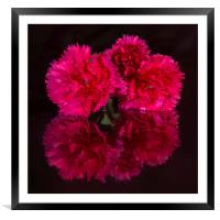 Reflected Carnations, Framed Mounted Print