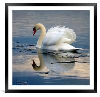 Swan on Ice, Framed Mounted Print