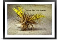 Yellow Fan Wing Mayfly, Framed Mounted Print
