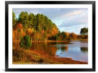 Autumn at Newborough Forest, Framed Mounted Print