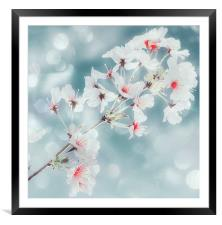 Beautiful Blossom, Framed Mounted Print