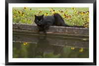 Mirror cat, Framed Mounted Print