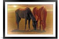 Horses In The Sunset, Framed Mounted Print