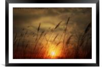 Following The Sun, Framed Mounted Print