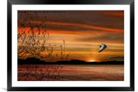 Wild Goose In Flight, Framed Mounted Print