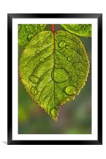 Raindrops On A Leaf, Framed Mounted Print