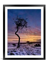 Crooked Tree, Framed Mounted Print