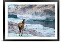Glencoe Deer, Framed Mounted Print