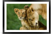 Motherly Love, Framed Mounted Print