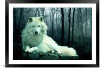 Arctic Wolf, Framed Mounted Print