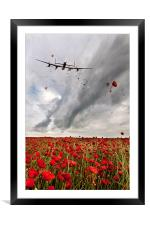 Poppies Dropped , Framed Mounted Print