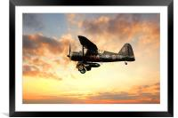 Lysander, Framed Mounted Print