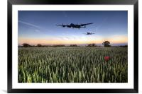 Poppy Tail Chase, Framed Mounted Print