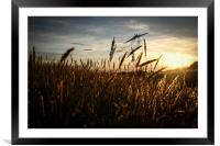 As The Sun Sets, Framed Mounted Print