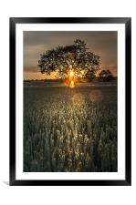 Tree of Light, Framed Mounted Print