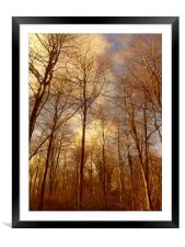 Reaching for Spring., Framed Mounted Print
