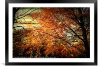 Touched by Autumn, Framed Mounted Print