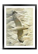 Feathers on Feathers, Framed Mounted Print