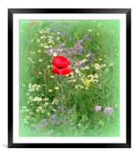 Growing Wild , Framed Mounted Print