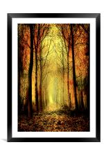 Arch of Trees, Framed Mounted Print