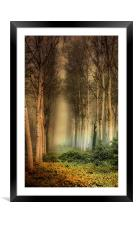 Birch Trees in the mist., Framed Mounted Print