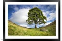 "Sycamore Gap (the ""Robin Hood Tree""), Framed Mounted Print"