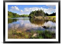 Tarn Hows, Lake District, Framed Mounted Print