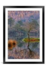 Rydalwater Tree, Framed Mounted Print