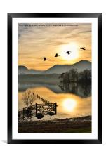Geese In The Golden Hour., Framed Mounted Print
