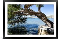 Puerto Pollensa Harbour From The Pine Walk, Framed Mounted Print