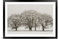 Winter Trees, Framed Mounted Print