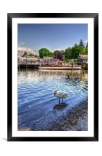 Quick Preen - Lake Windermere, Framed Mounted Print