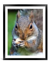 Mad about nuts., Framed Mounted Print